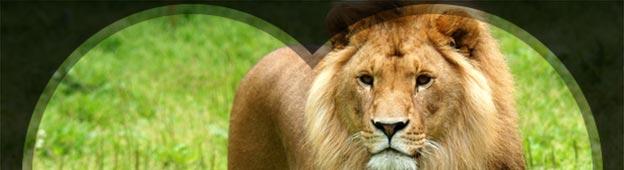 lion-lp